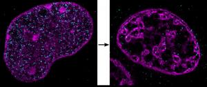 Zellen ohne genügend Sauerstoff verdichten die DNA