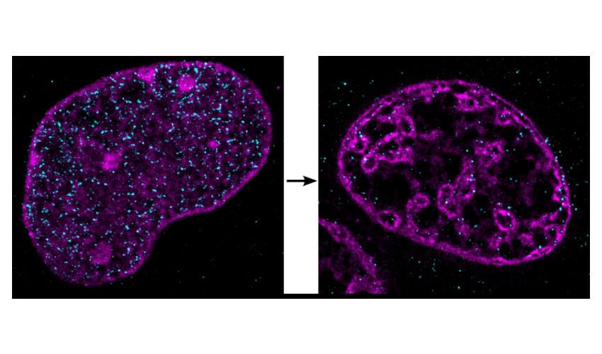 Zellen ohne genügend Sauerstoff verändern die DNA!